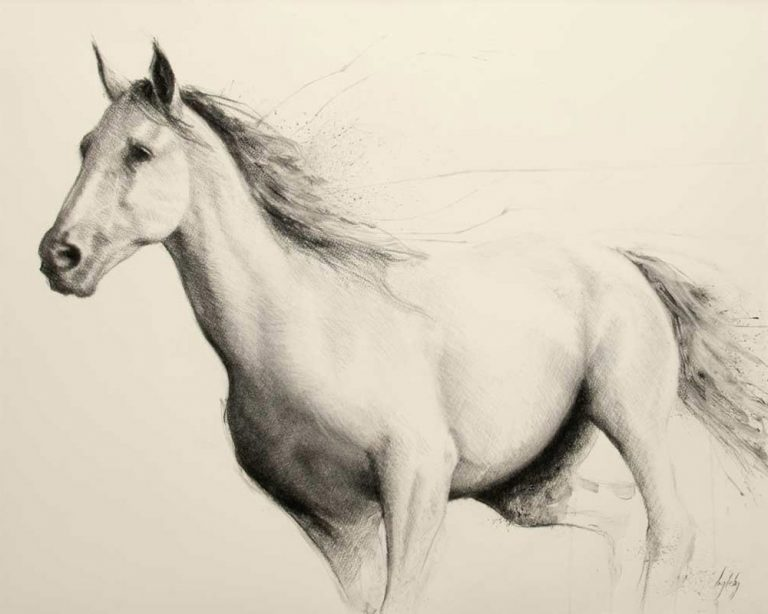 art print wildlife equine dog horse irish charcoal