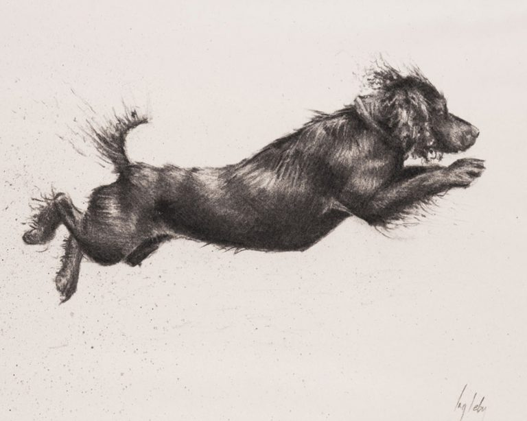 art print cocker spaniel drawing contemporary