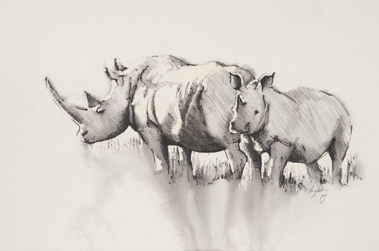 rhino calf pencil sketch