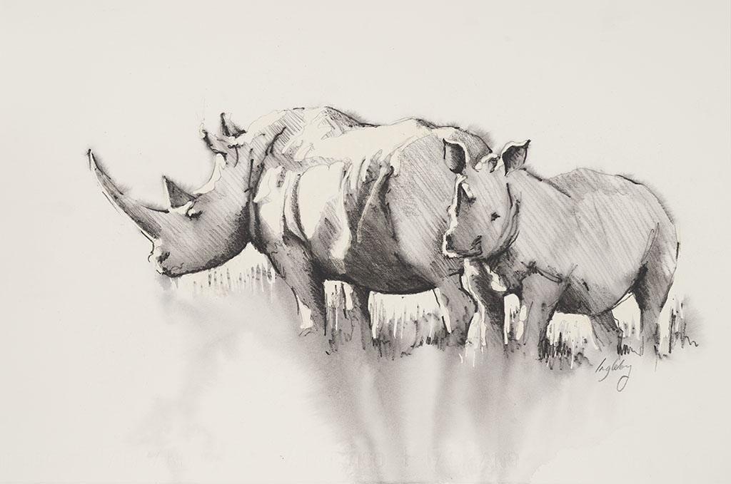 rhino calf pencil sketch