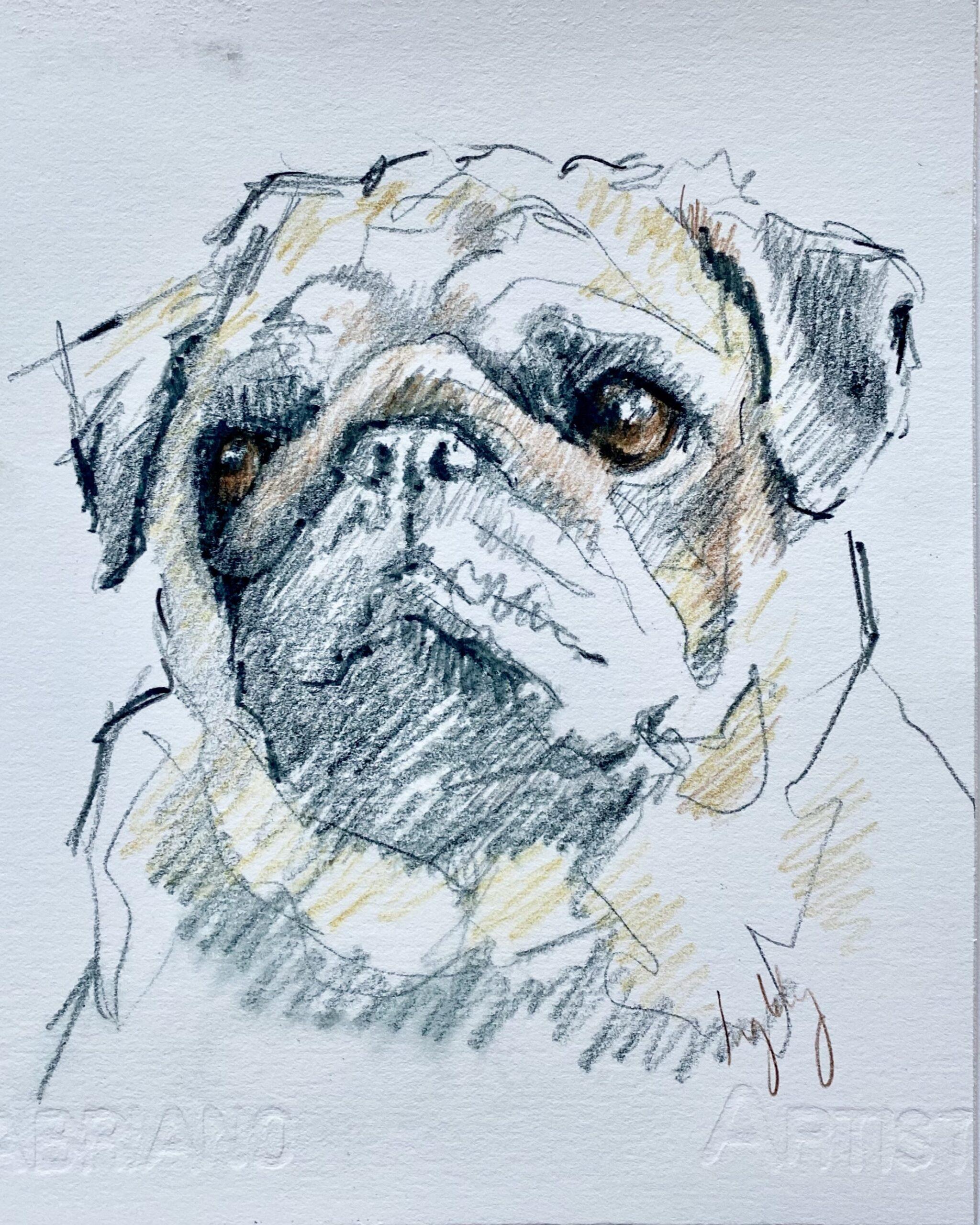 pug, portrait, drawing, christmas