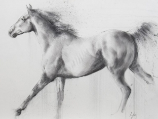 charcoal drawing of thoroughbred horse