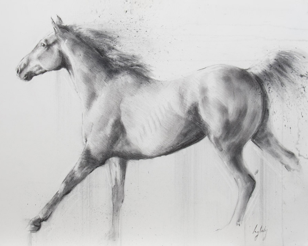 art print wildlife equine  horse contemporary drawing charcoal