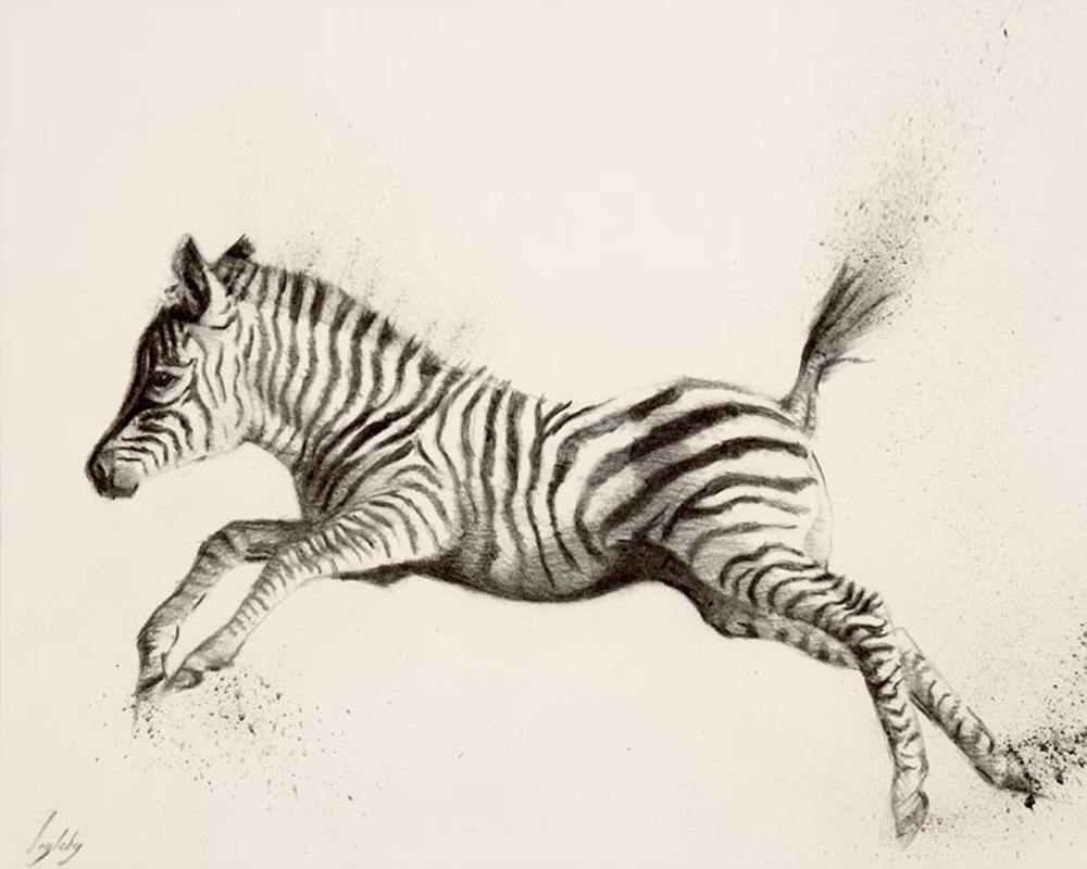art print wildlife zebra contemporary drawing charcoal