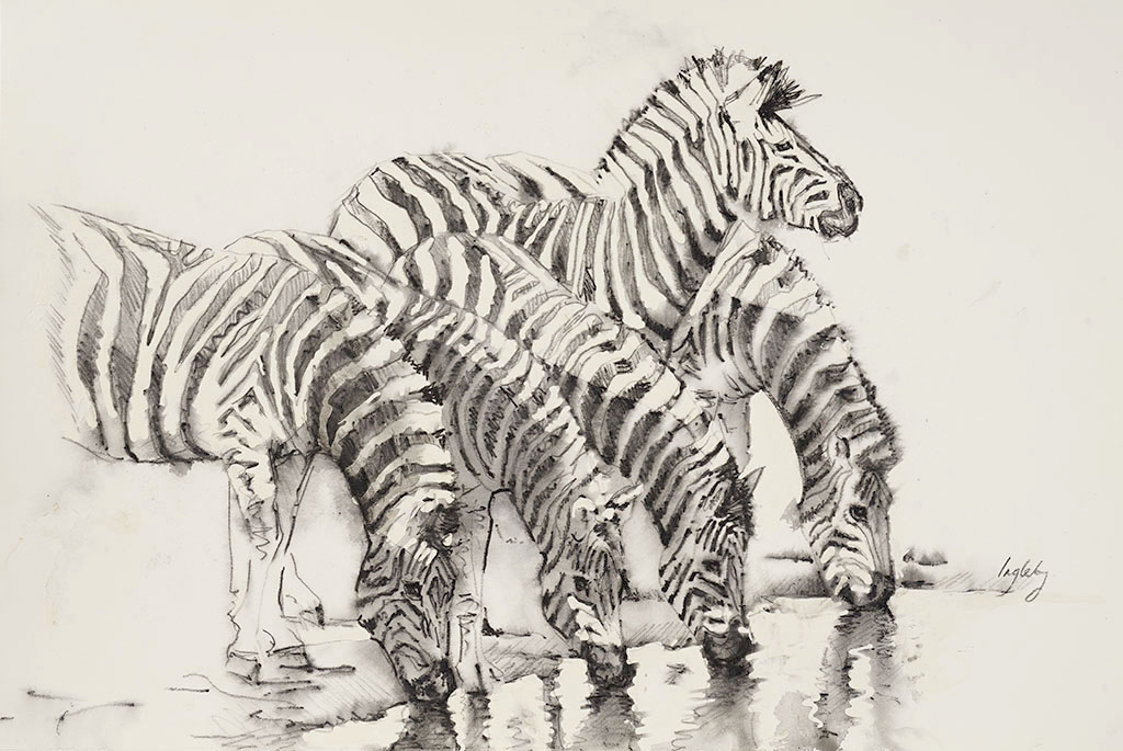 zebra drawing, art