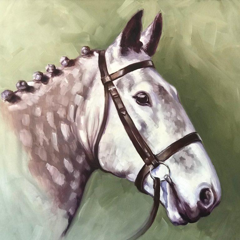 horse portrait, irish draught, hunter