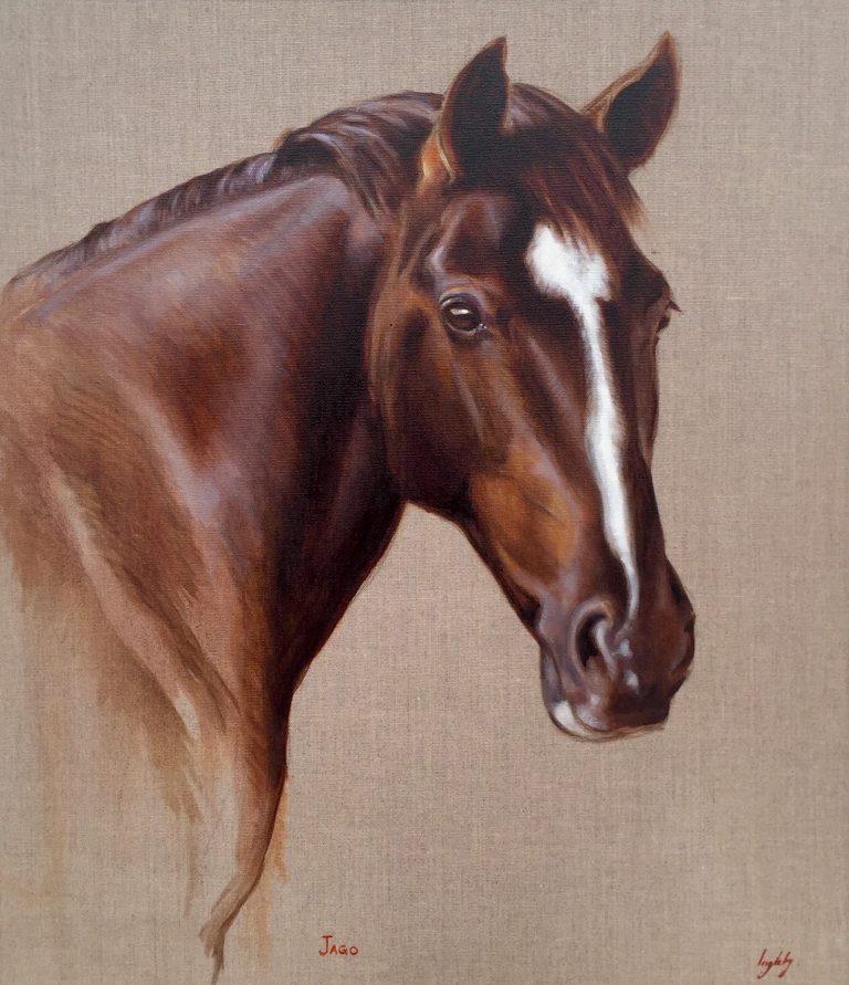 showjumping, sports horse, warmblood, bay horse